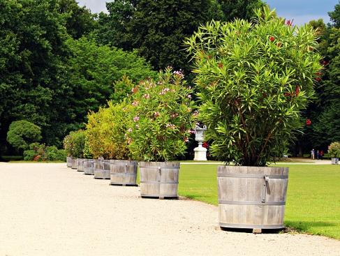 Pflanzen in Holzkübeln